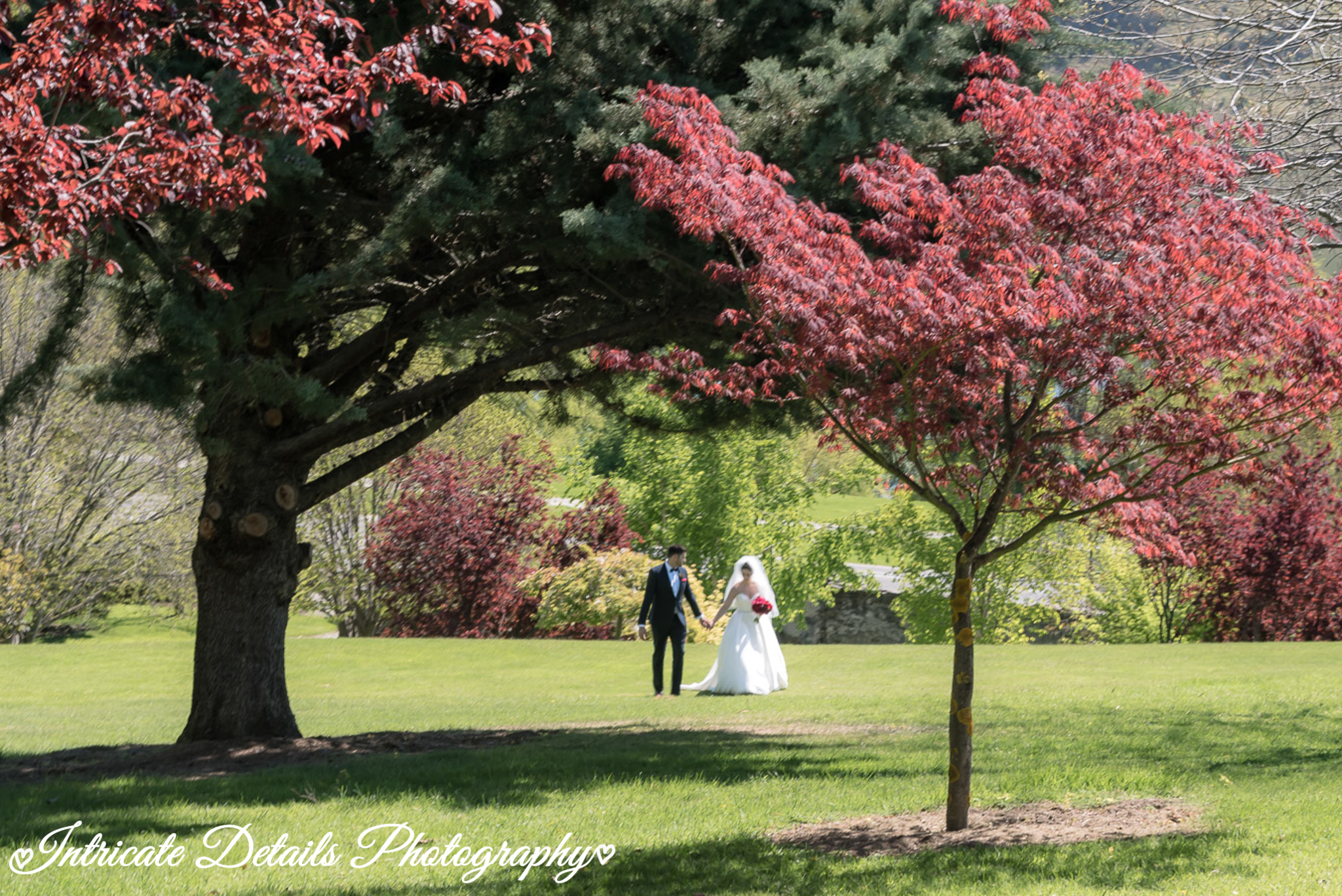 Wedding couple strolling under pretty red tree folliage